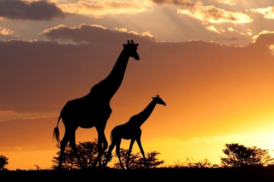 Classic African Safari, Kenya, Masai Mara