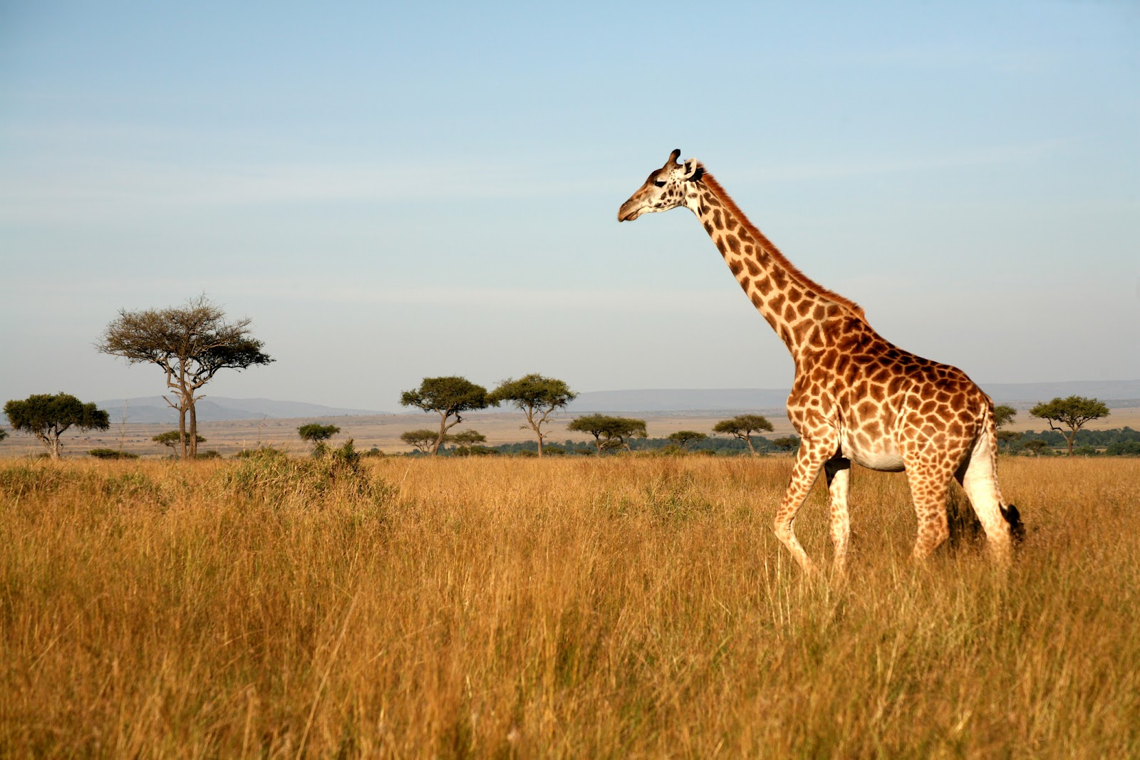 East Africa Safari