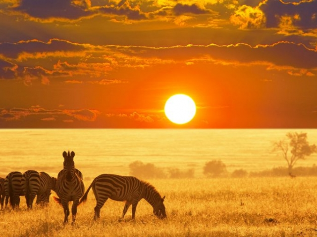 Namibia, Zebra Sunset