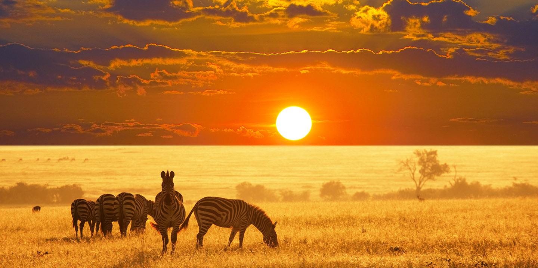 Namibia, Zebra Sunset