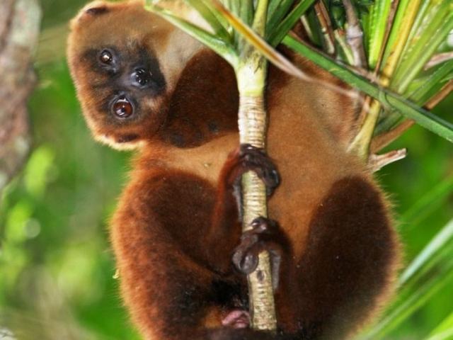 Ranofana Lemurien