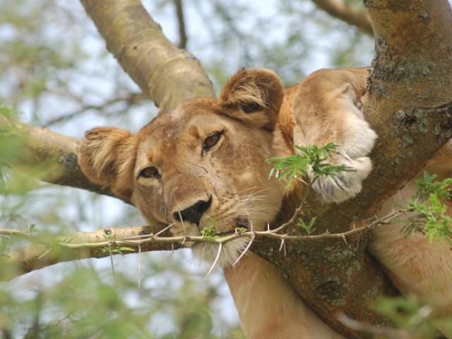 Uganda, Queen Elizabeth National Park