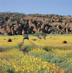 Western Australia | Wildflowers