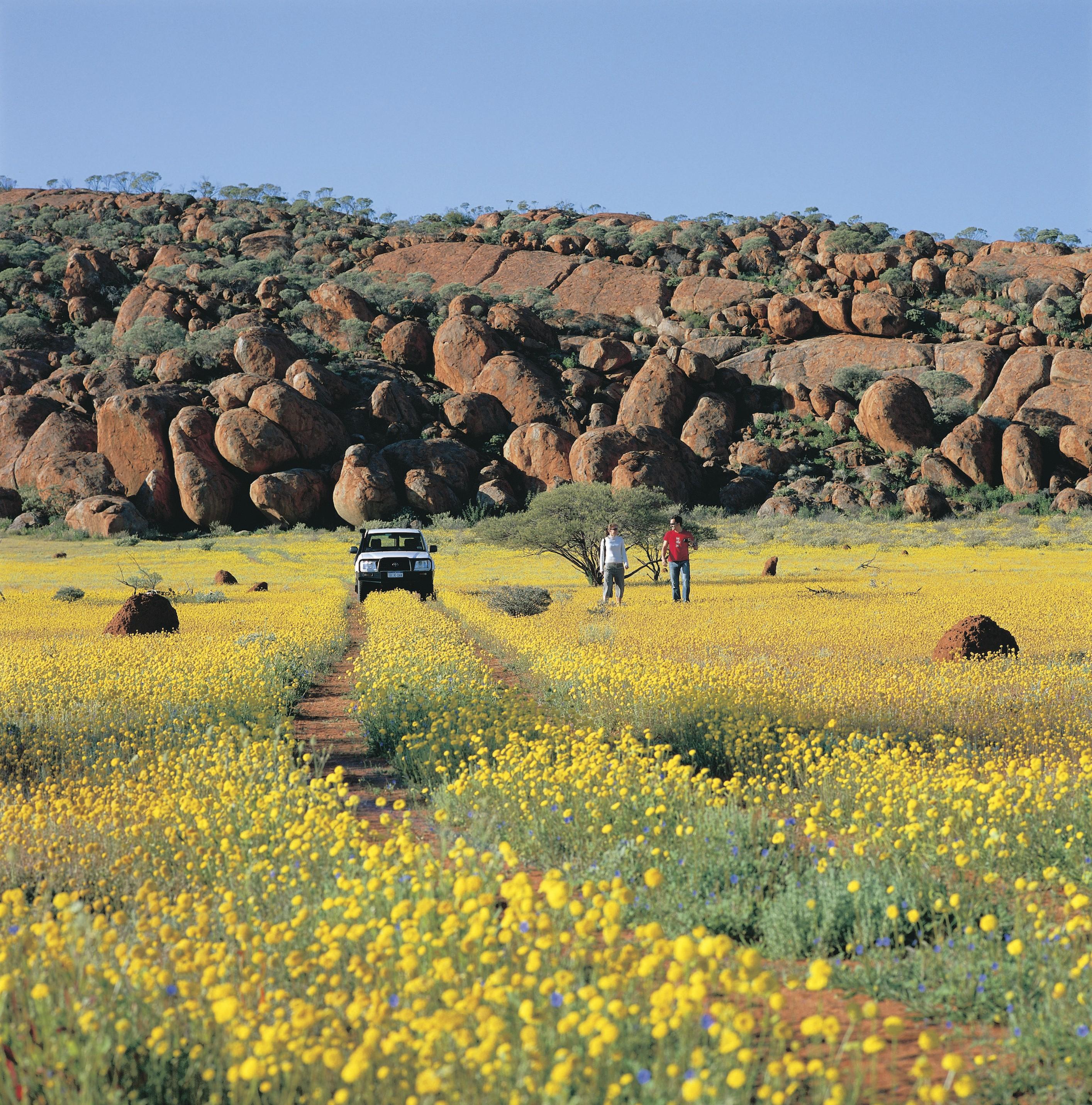 Western Australia, Wildflowers