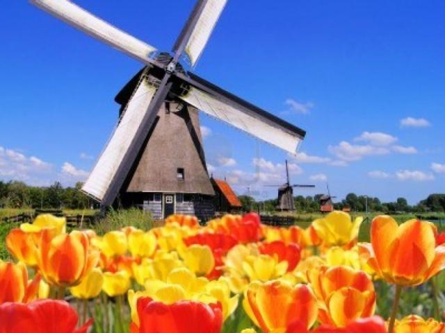 Amsterdam Explorer - Tulip Bulb Fields, Keukenhof, The Neverlands