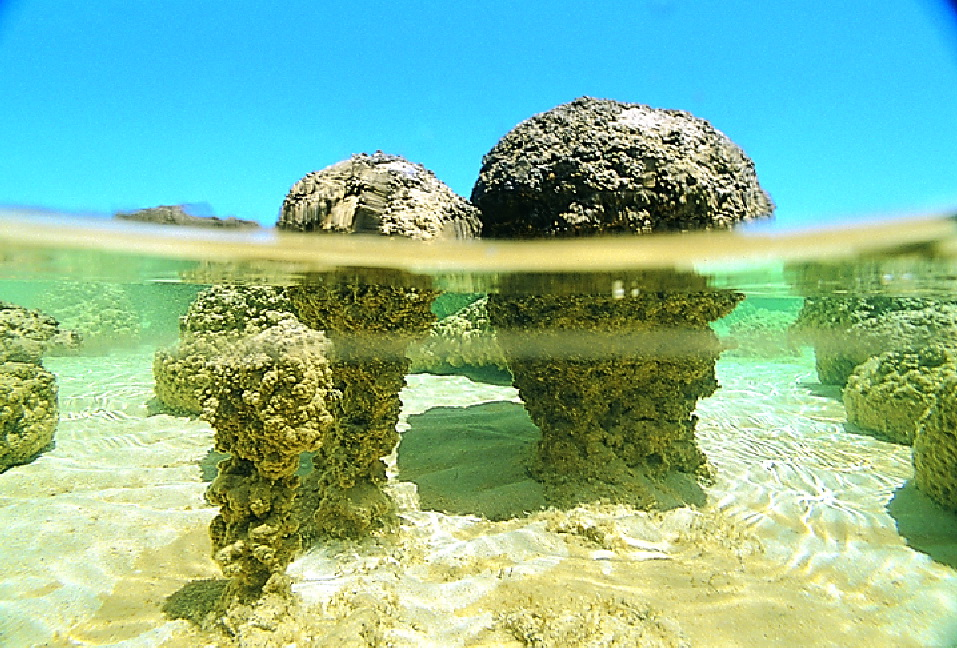 Western Australia, Monkey Mia, Stromatalites