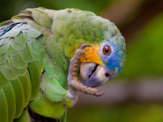 MV Anakonda - Exploring Amazon Birdlife
