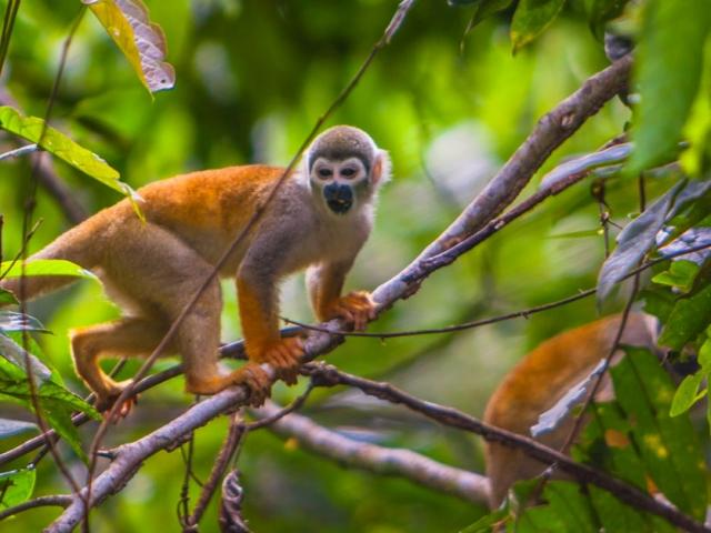 MV Anakonda - Exploring Amazing Wildlife