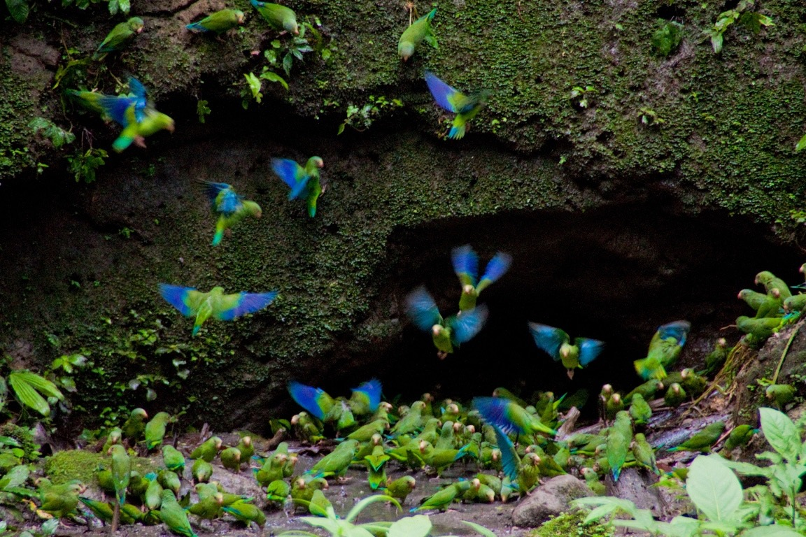 MV Anakonda - Exploring Amazing Birdlife