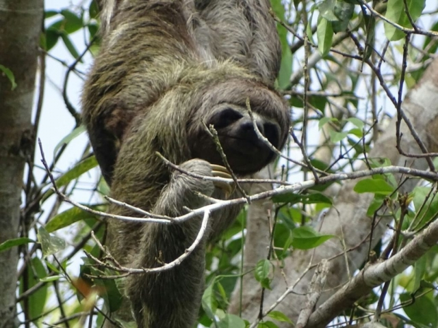 Say Hello to a Sloth