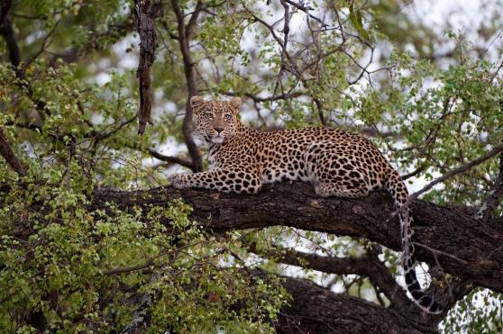 Botswana, Okavango Delta, Abu Camp
