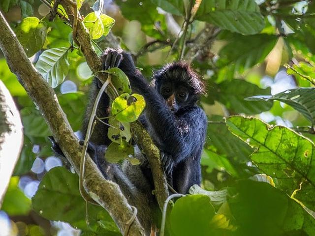 Cute Jungle Wildlife
