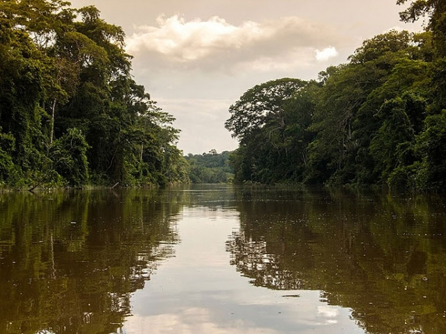 Tranquil Amazon Tributary