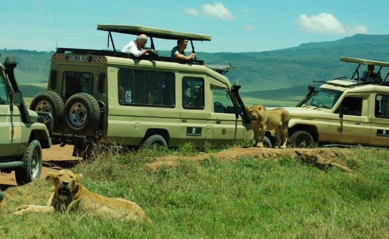 Luxury Kenya, Lions
