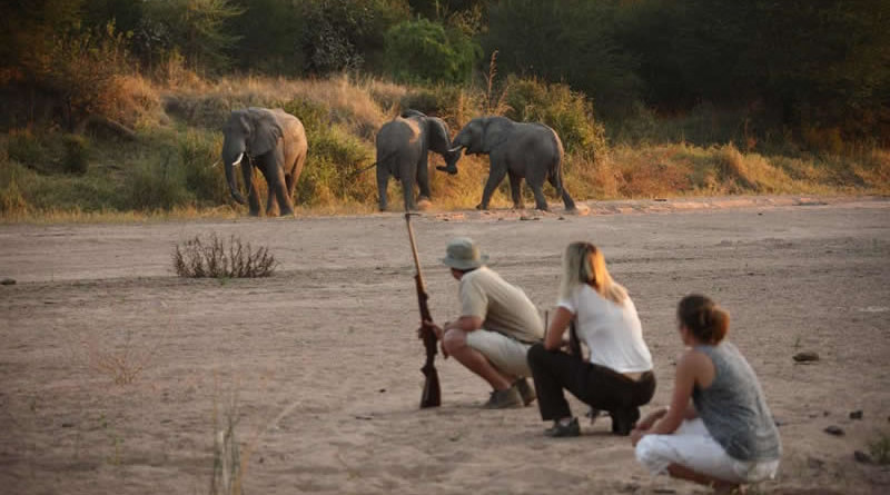 Tanzania, Ruaha National Park
