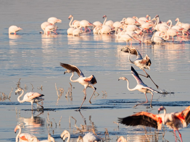 African Safari Adventure | Flamingo, Lake Nakuru National Park, Kenya