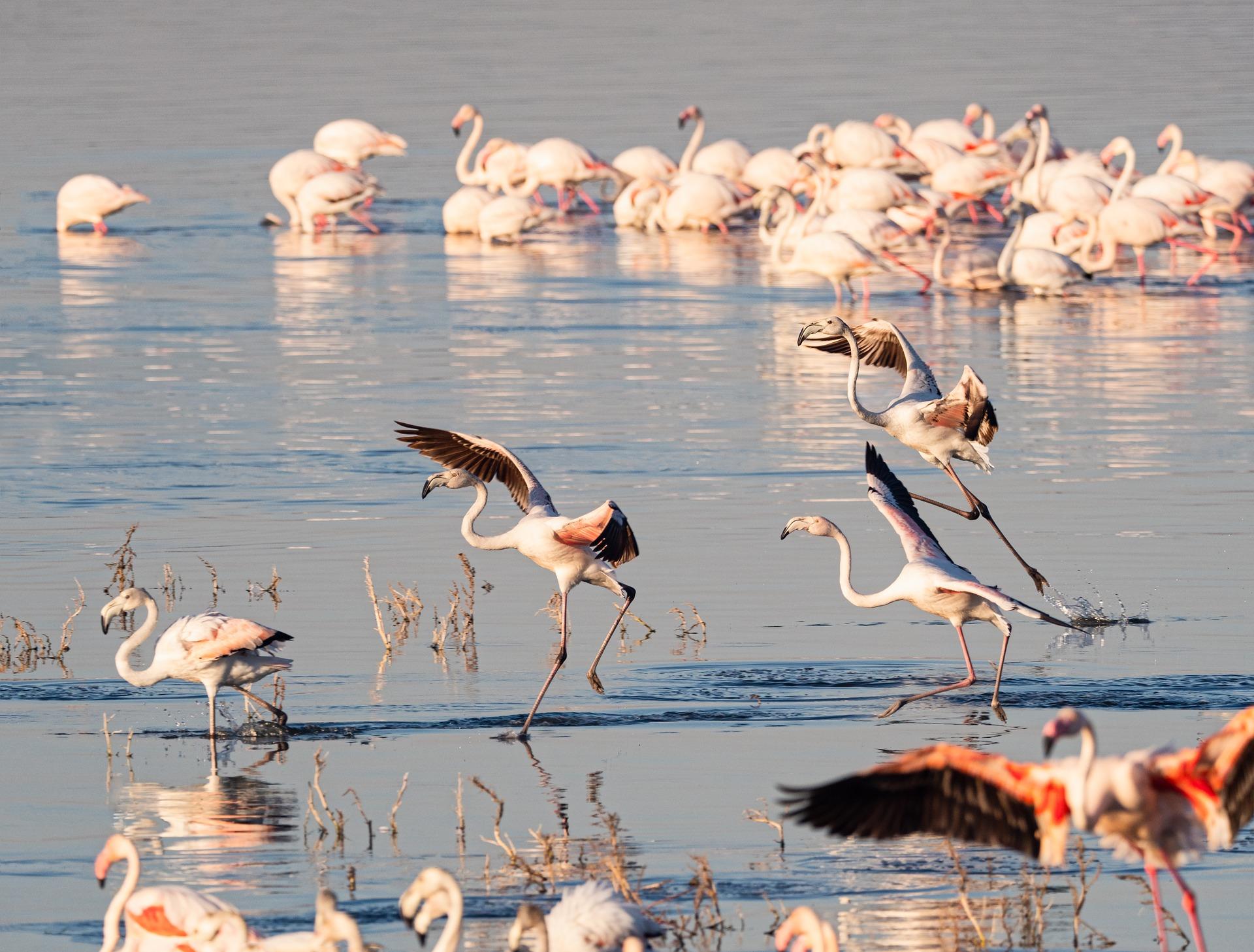 African Safari Adventure   Flamingo, Lake Nakuru National Park, Kenya