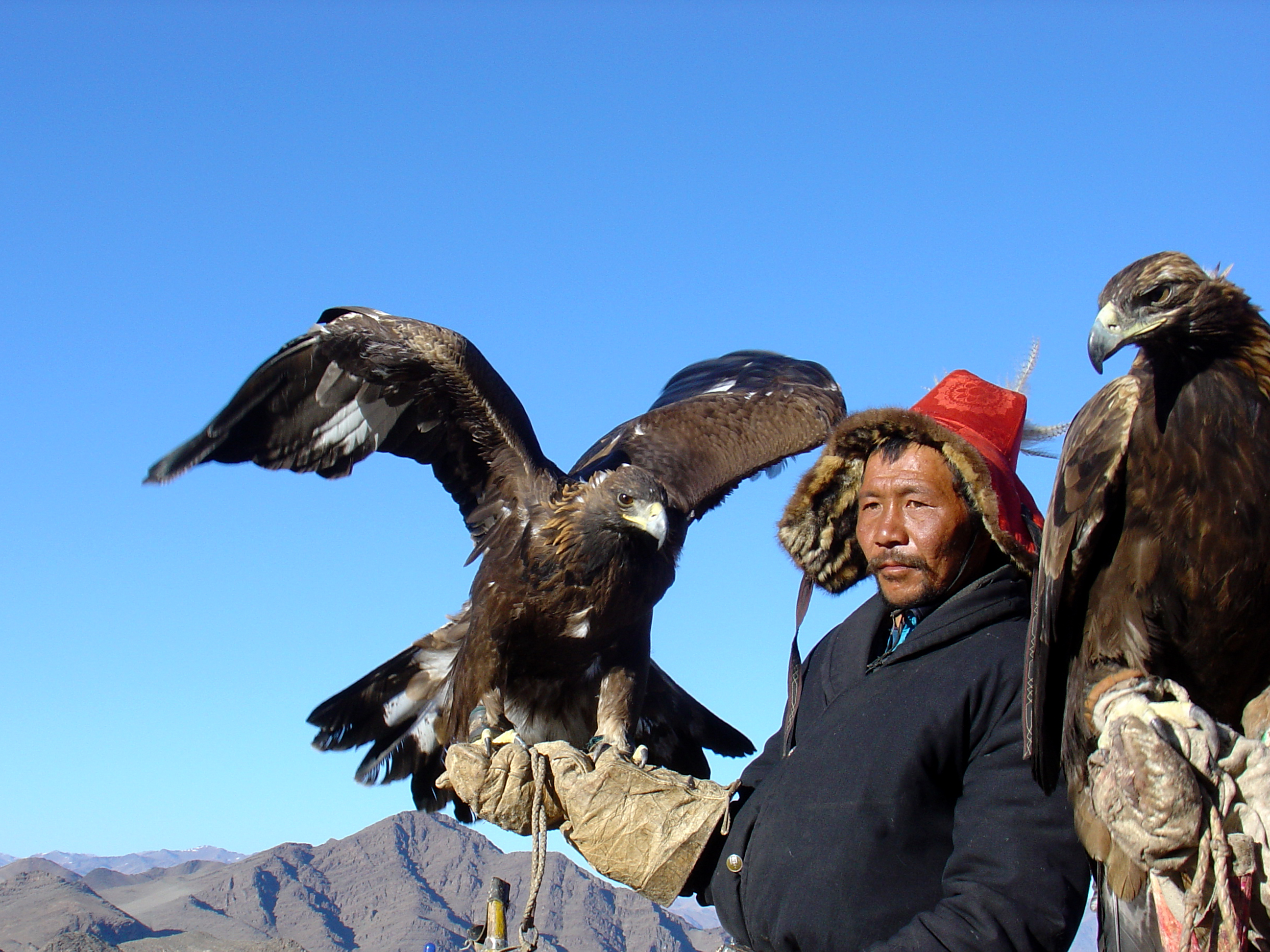 Mongolia, Golden Eagle Training