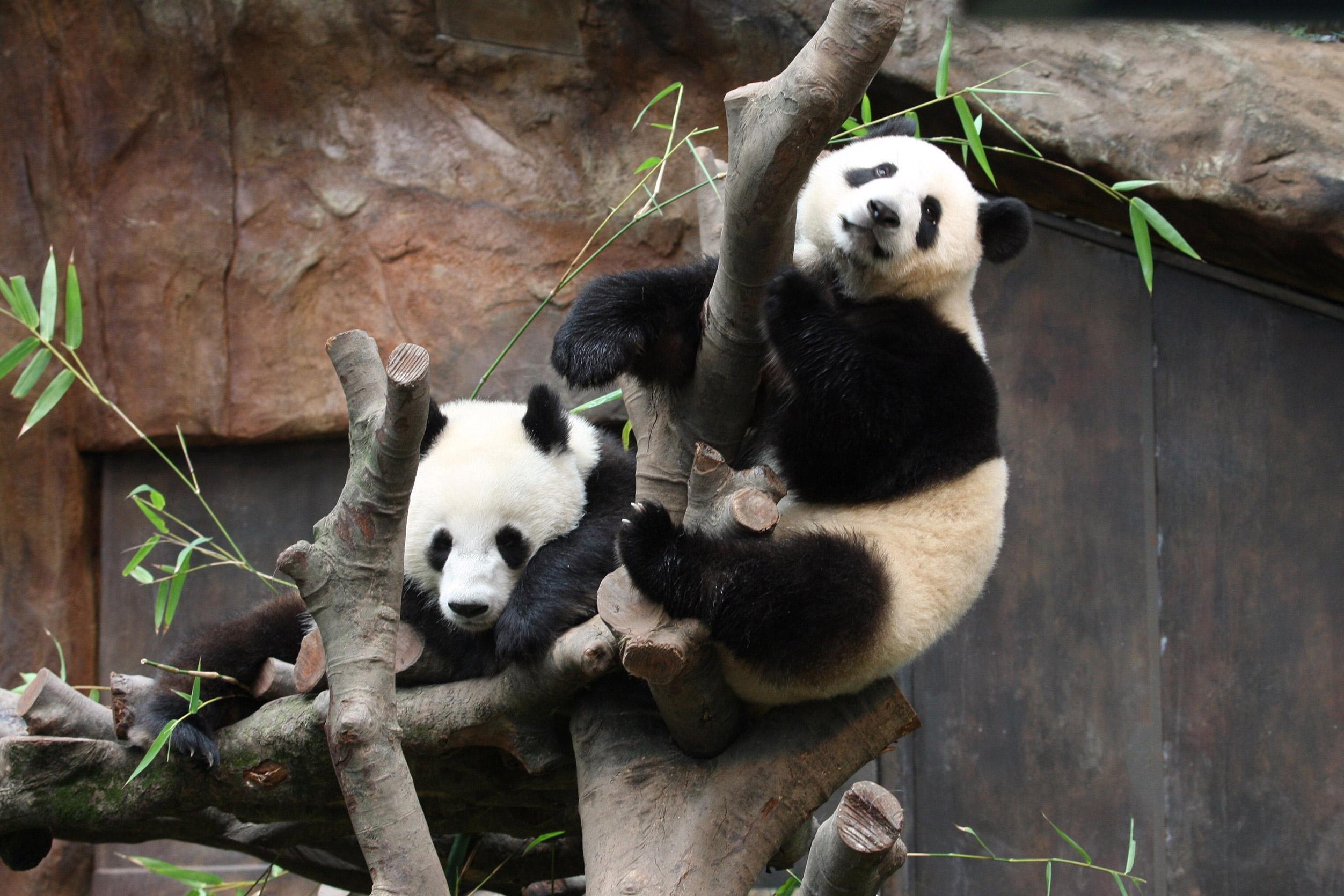Hong Kong, Ocean Park, Amazing Asian Animals