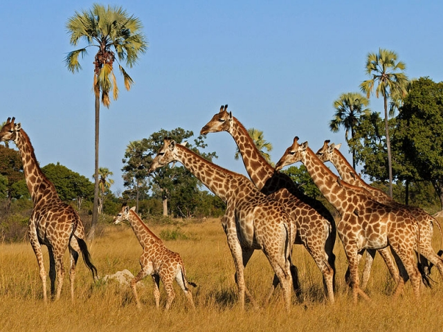 Safari of Legends, Zimbabwe, Hwange National Park