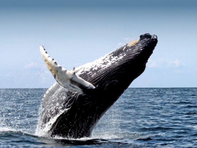Iceland, Reykjavik, Whale Watching