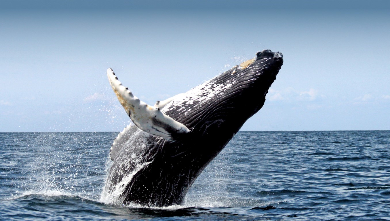 Gems of Iceland, Whale Watching, Reykjavik, Iceland