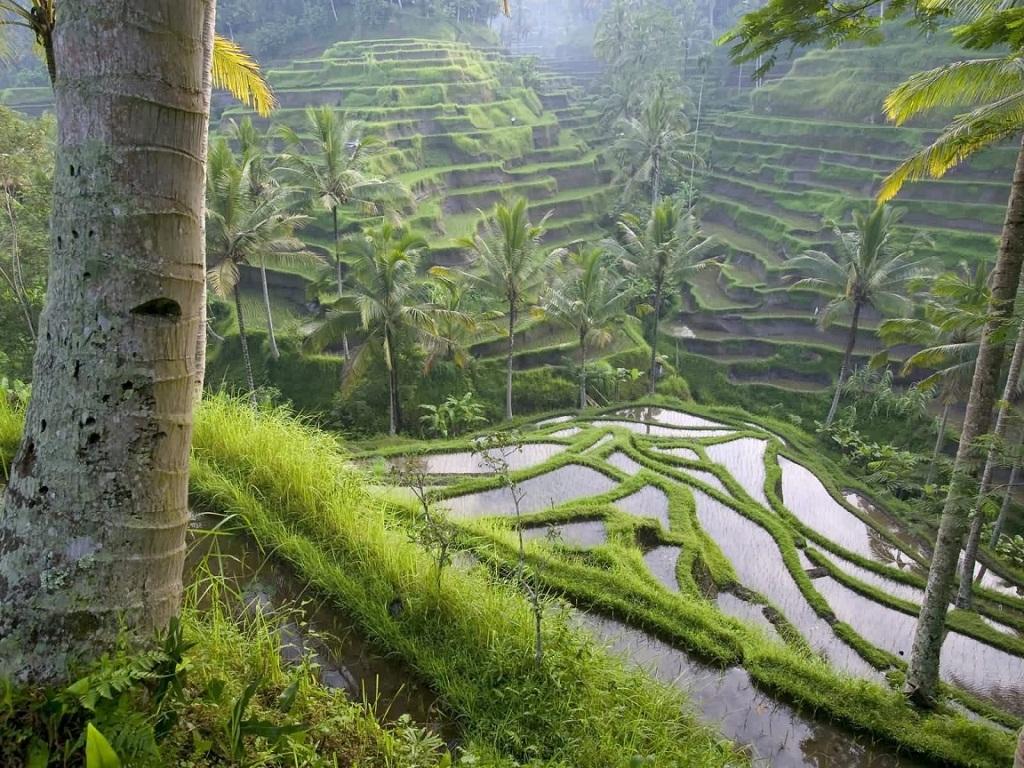 Indonesia, Ubud