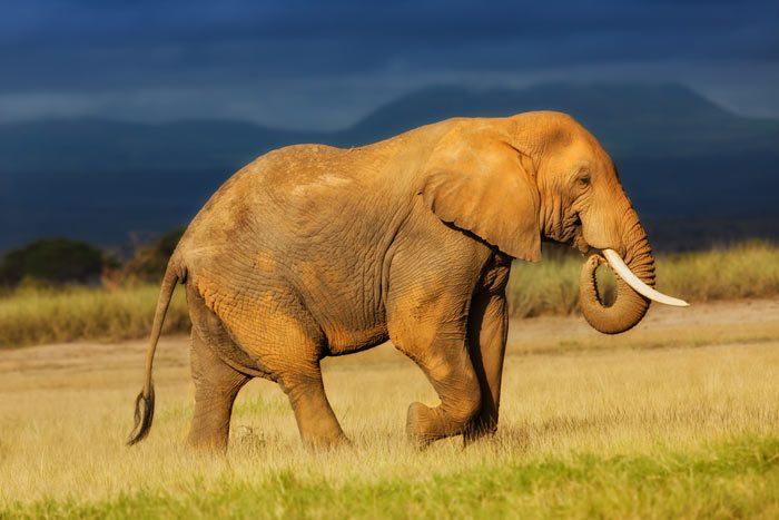 Kenya, Amboseli National Park