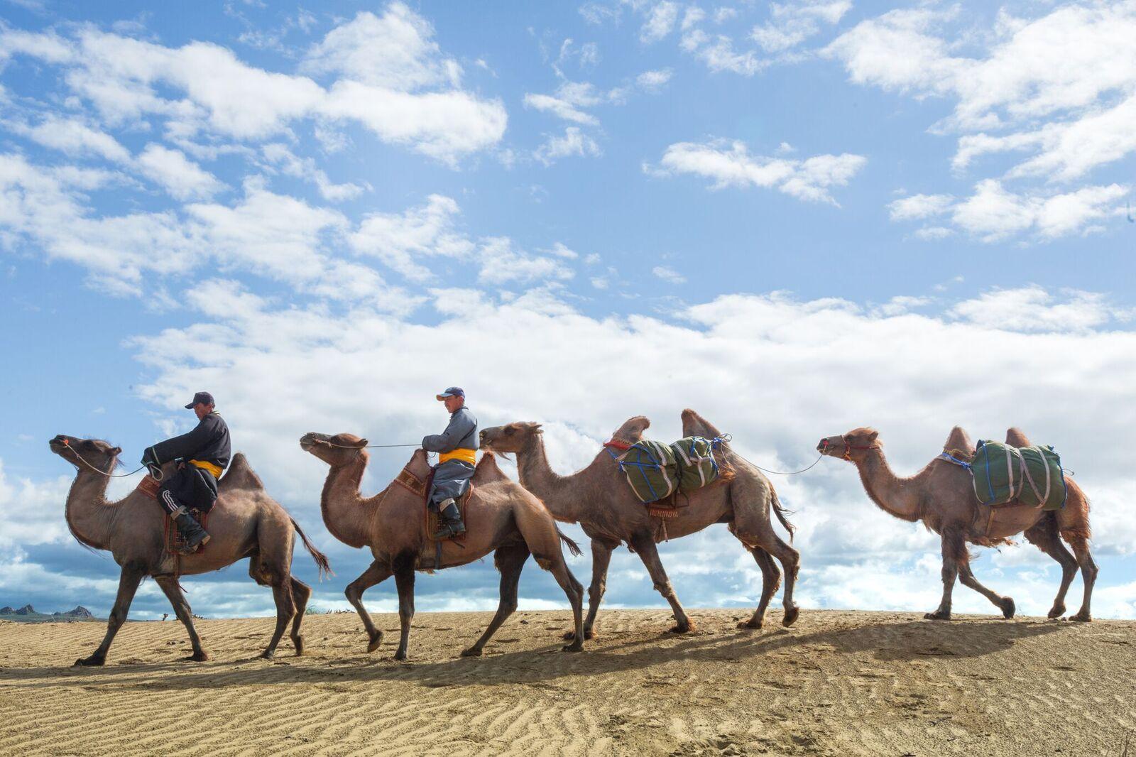 Mongolia, Ride Khugnu Khan Camels