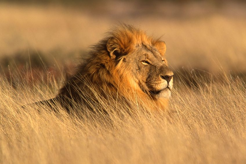 Elegant Zambia, Lower Zambezi National Park