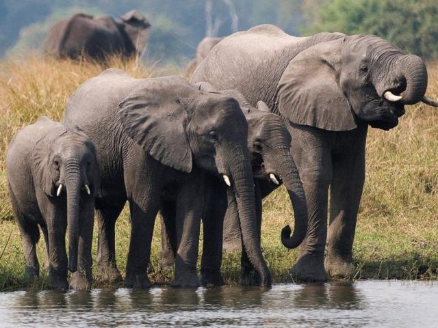 Malawi's Lakes & Wildlife - Liwonde National Park