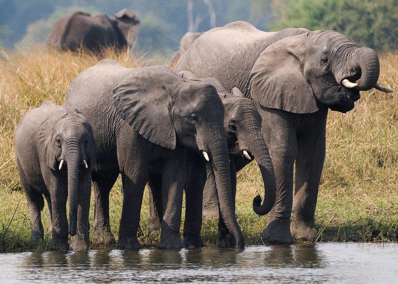 Malawi, Liwonde National Park