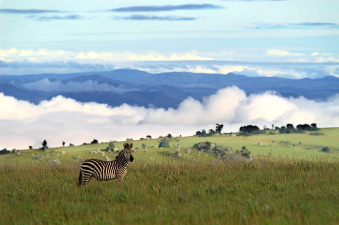 Malawi, The Nyuka Plateau