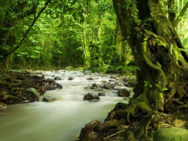 Taman Negara Jungle Experience, Taman Negara Jungle