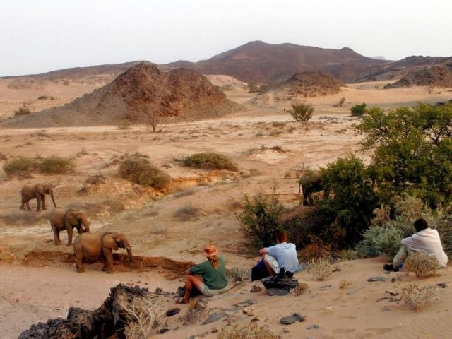 Namibia, Dararland Camp, Elephants