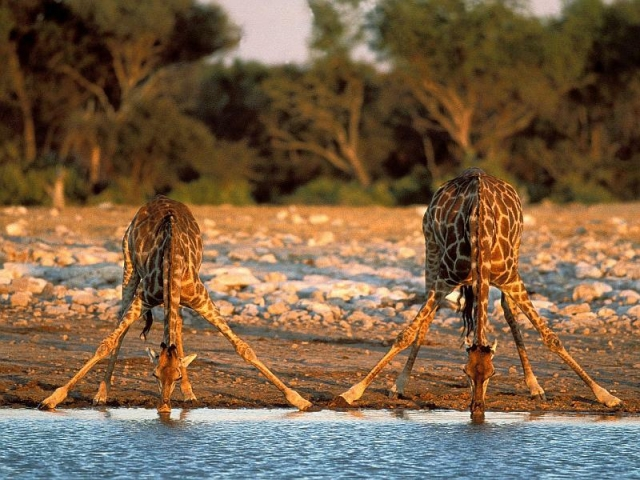 Ultimate Namibia Adventure | Etosha National Park
