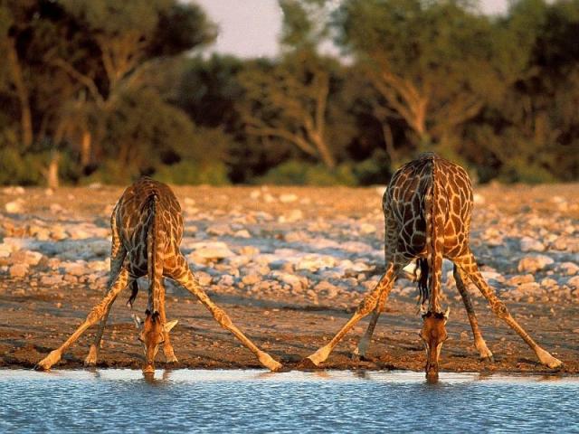 Namibian Explorer, Etosha National Park