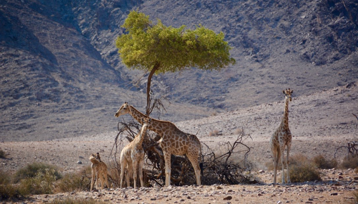 Namibia, The Hoanib River
