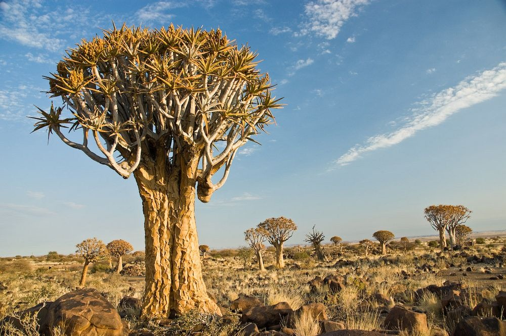 Namibia Adventure | Quiver Tree Forest