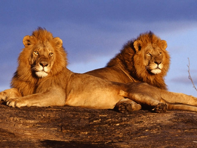 South Africa, Kruger National Park