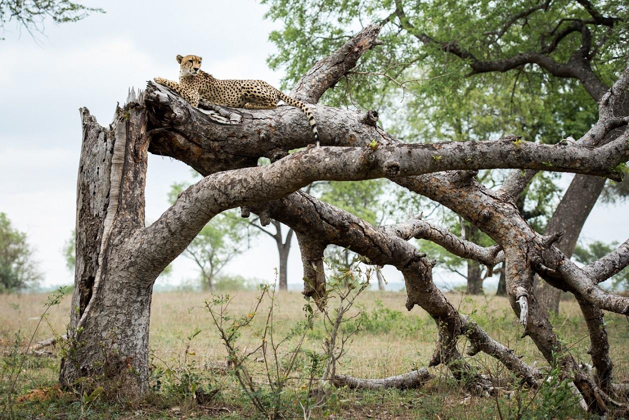 South Africa, Kruger National Park, Londolozi Game Reserve