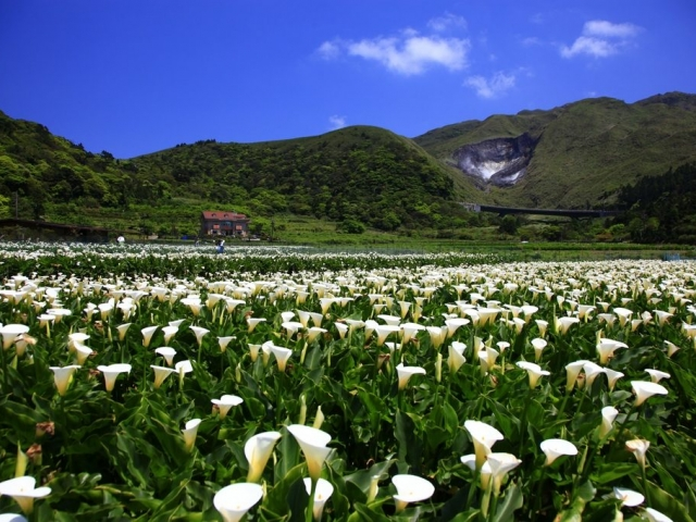 Taiwan, Taipei, Yangmingshan National Park