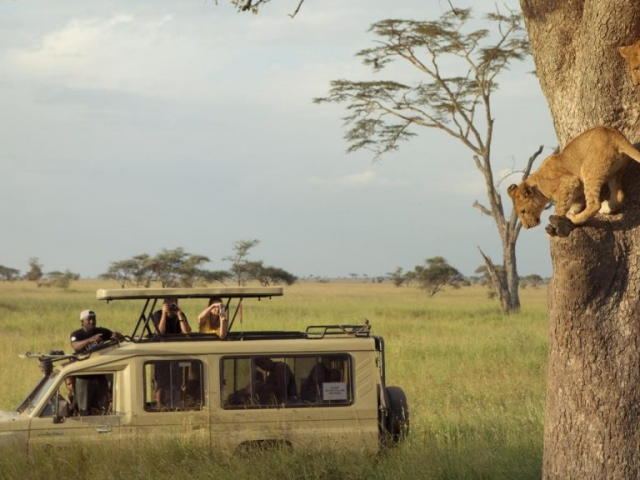 Tanzania, on safari