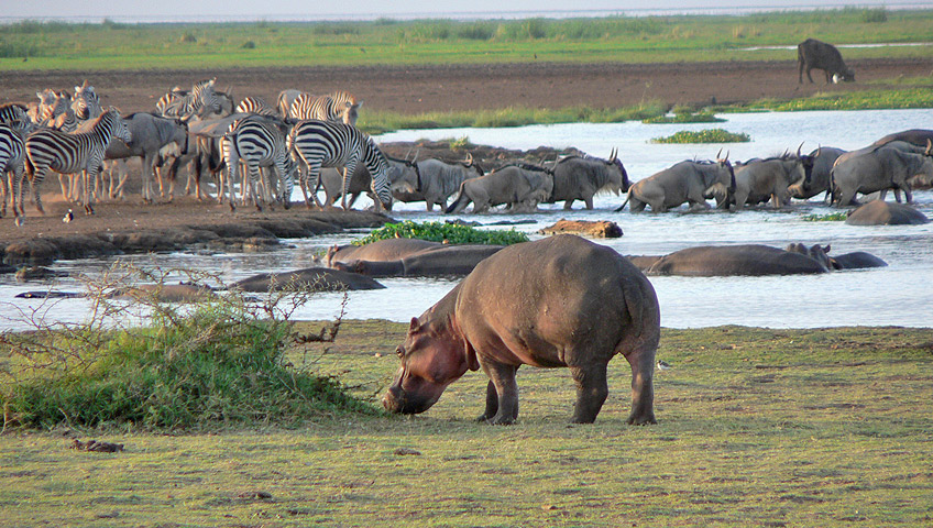 Tanzania, Lake Manyara National Park