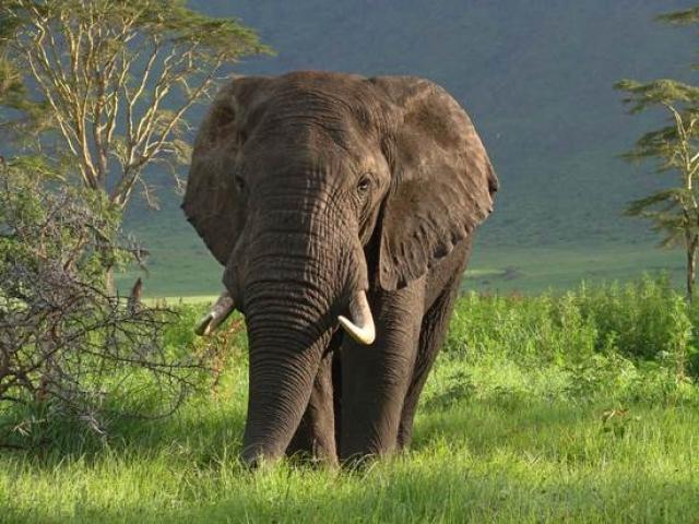 Great African Odyssey | Ngorongoro Crater, Tanzania
