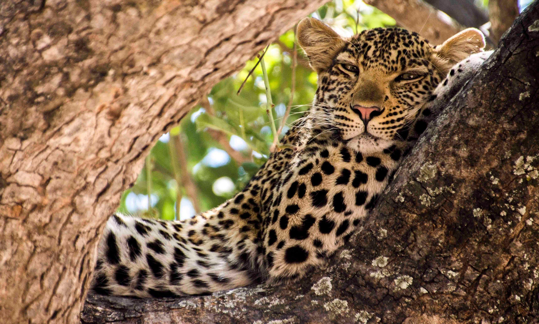 Tanzania Encompassed - Ruaha National Park, Tanzania
