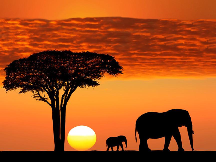 Tanzania, Serengeti Natioal Park