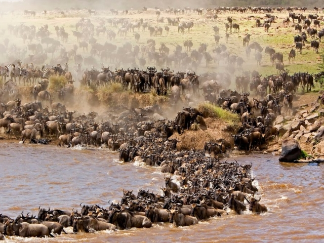 Tanzania, Serengeti National Park, Wildebeest migration