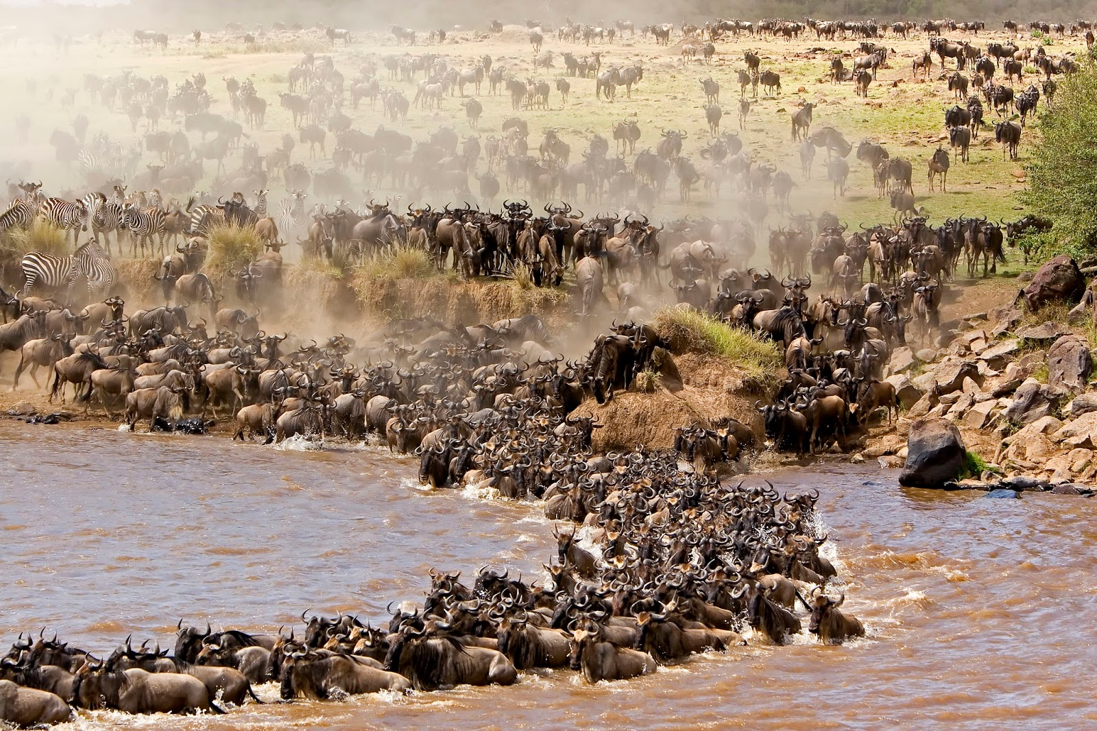 Tanzania in Style, Serengeti National Park, Wildebeest migration