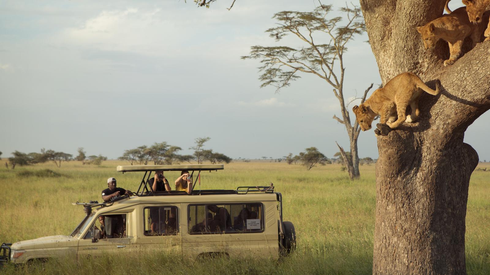 Tanzania, on safari